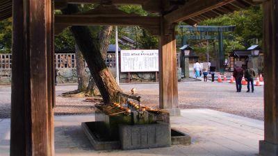 f:id:kabutoyama-tigers:20140310121056j:image