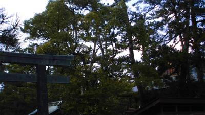 f:id:kabutoyama-tigers:20140311175526j:image