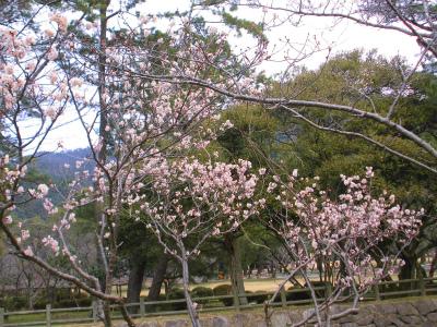 f:id:kabutoyama-tigers:20140311193846j:image