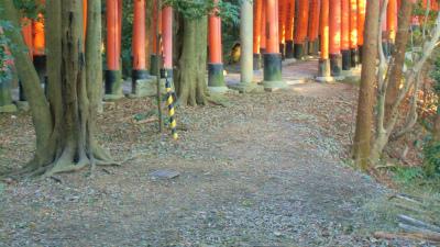 f:id:kabutoyama-tigers:20140317133159j:image