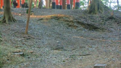 f:id:kabutoyama-tigers:20140317133556j:image