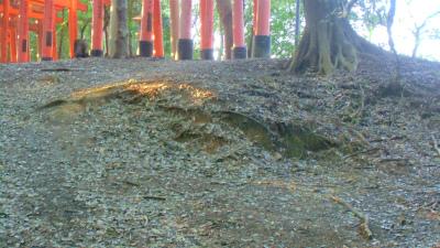 f:id:kabutoyama-tigers:20140317135949j:image