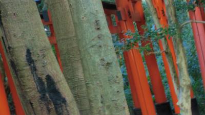 f:id:kabutoyama-tigers:20140317141100j:image