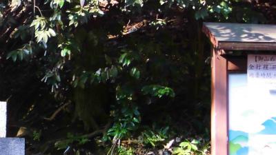 f:id:kabutoyama-tigers:20140318142811j:image