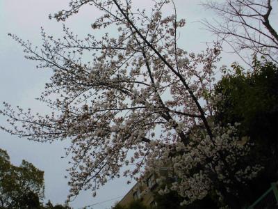 f:id:kabutoyama-tigers:20140330175315j:image