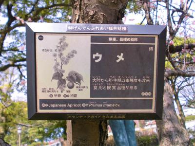 f:id:kabutoyama-tigers:20140404090410j:image