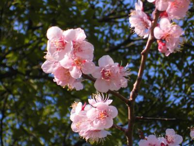 f:id:kabutoyama-tigers:20140404090411j:image