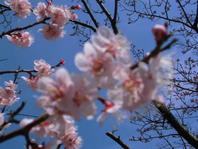 f:id:kabutoyama-tigers:20140404090412j:image