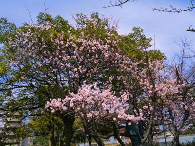 f:id:kabutoyama-tigers:20140404090413j:image
