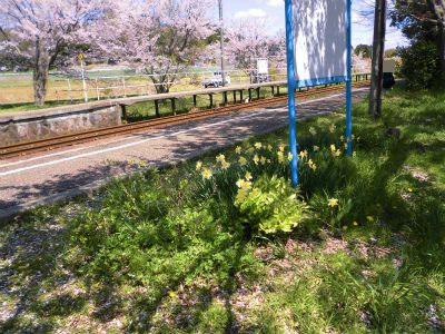 f:id:kabutoyama-tigers:20140430131141j:image