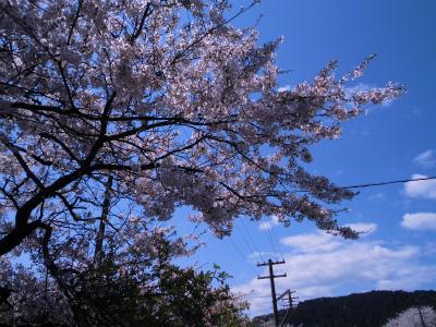f:id:kabutoyama-tigers:20140430131142j:image