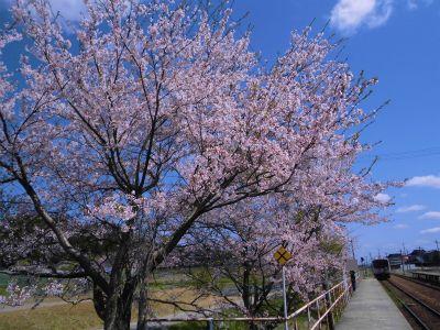 f:id:kabutoyama-tigers:20140430131147j:image