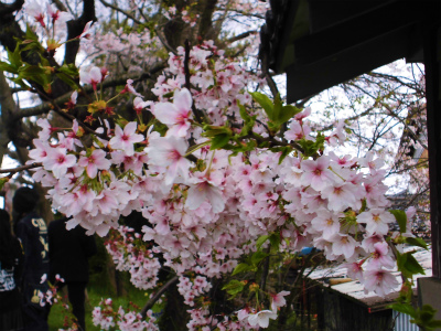 f:id:kabutoyama-tigers:20140430133435j:image