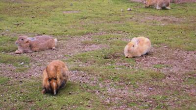 f:id:kabutoyama-tigers:20140701170709j:image
