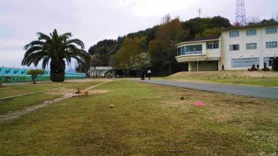 f:id:kabutoyama-tigers:20140701171354j:image