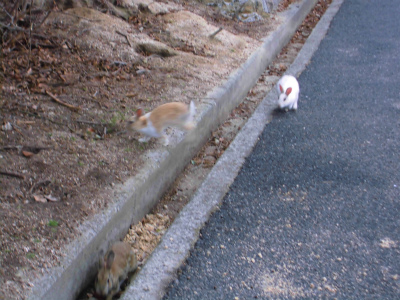 f:id:kabutoyama-tigers:20140706172404j:image