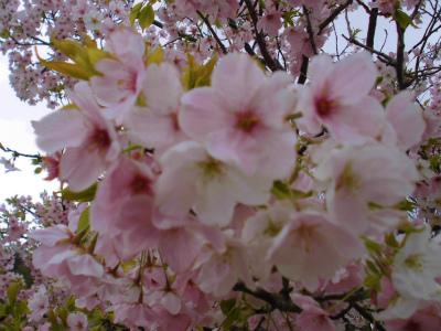 f:id:kabutoyama-tigers:20140706181053j:image