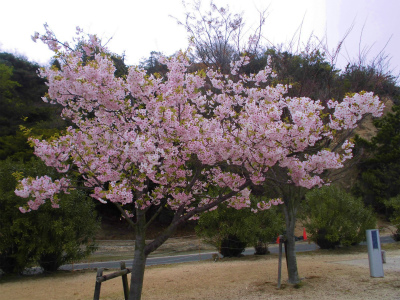 f:id:kabutoyama-tigers:20140706181054j:image