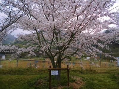 f:id:kabutoyama-tigers:20140706181946j:image