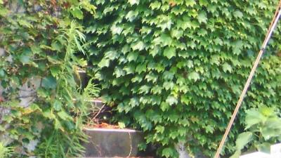 f:id:kabutoyama-tigers:20140715113334j:image