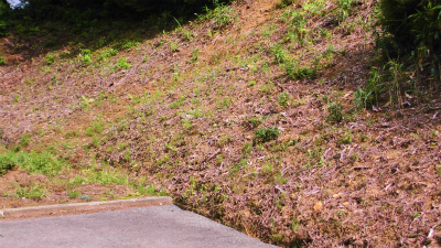 f:id:kabutoyama-tigers:20140728164834j:image
