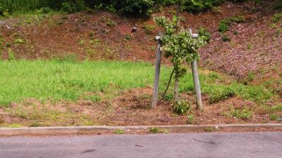 f:id:kabutoyama-tigers:20140730163625j:image