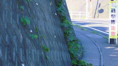 f:id:kabutoyama-tigers:20140803205951j:image