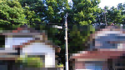 f:id:kabutoyama-tigers:20140803210921j:image