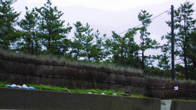 f:id:kabutoyama-tigers:20140818124212j:image