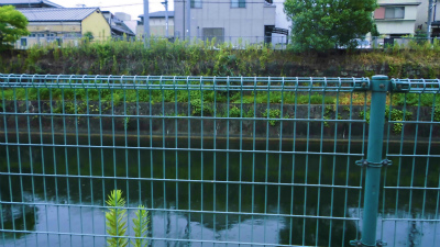 f:id:kabutoyama-tigers:20140917173217j:image