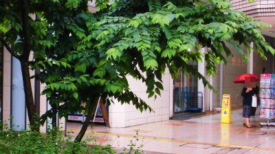 f:id:kabutoyama-tigers:20141226091416j:image