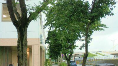 f:id:kabutoyama-tigers:20141227024132j:image