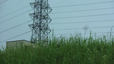 f:id:kabutoyama-tigers:20141227030327j:image
