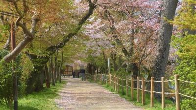 f:id:kabutoyama-tigers:20150410150709j:image