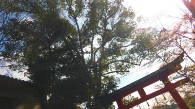 f:id:kabutoyama-tigers:20150410211041j:image