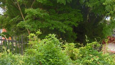 f:id:kabutoyama-tigers:20150517185513j:image