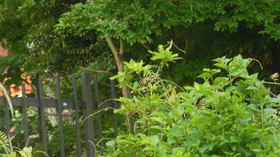 f:id:kabutoyama-tigers:20150517185723j:image
