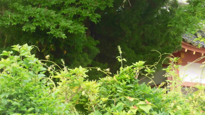f:id:kabutoyama-tigers:20150517185924j:image