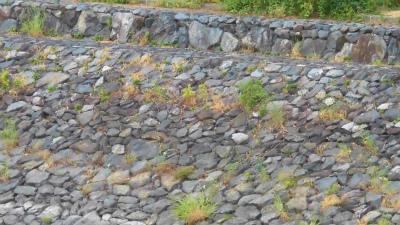f:id:kabutoyama-tigers:20150517191157j:image