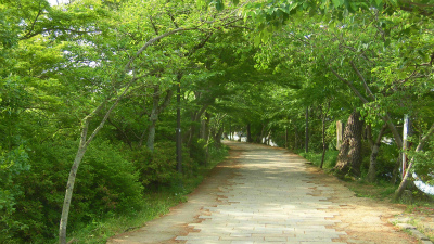 f:id:kabutoyama-tigers:20150517194539j:image
