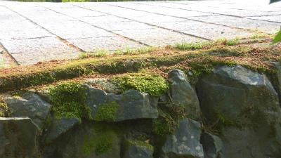 f:id:kabutoyama-tigers:20150529180403j:image