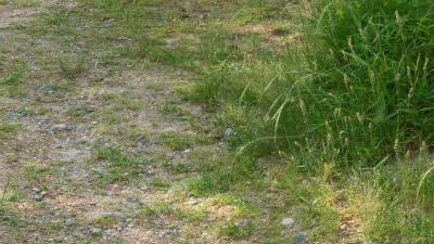 f:id:kabutoyama-tigers:20150529181702j:image