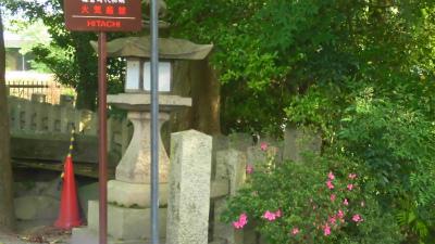 f:id:kabutoyama-tigers:20150530062448j:image
