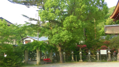 f:id:kabutoyama-tigers:20150530064105j:image