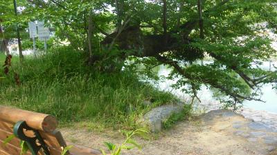f:id:kabutoyama-tigers:20150531195651j:image