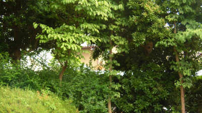 f:id:kabutoyama-tigers:20150608055731j:image