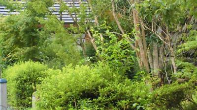 f:id:kabutoyama-tigers:20150620140634j:image