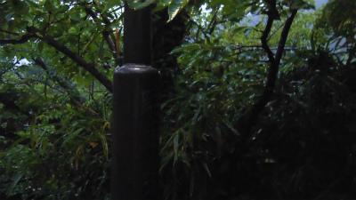 f:id:kabutoyama-tigers:20150627144501j:image
