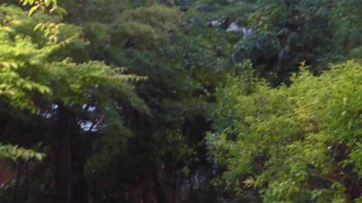 f:id:kabutoyama-tigers:20150627145346j:image