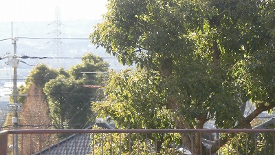 f:id:kabutoyama-tigers:20160123103218j:image